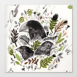 DARWIN FINCHES Canvas Print