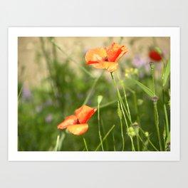 Little Wild Flowers  Art Print