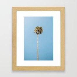 Palm Photography Framed Art Print