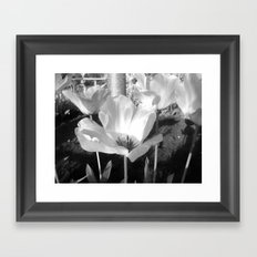 Moonflower Framed Art Print