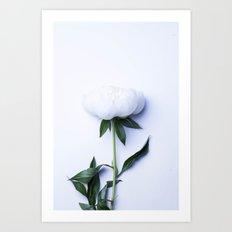 White Peony - Antique Flower Art Print