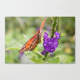 Butterfly in Ometepe, Nicaragua Canvas Print