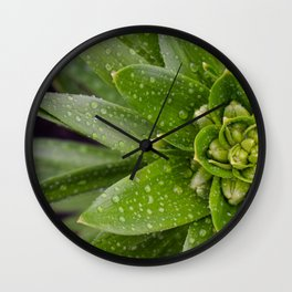 Asian Lily Plant After Rain Wall Clock