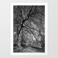 Oxford University Parks Art Print