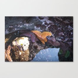 Tide Pool Slump Canvas Print