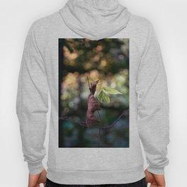 Nature fazination Hoody