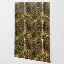 Summer forest Wallpaper