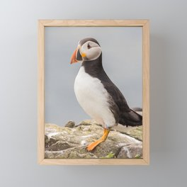 Wildlife ocean puffin birds portrait Framed Mini Art Print