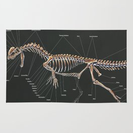 Dilophosaurus Wetherilli Skeleton Study Rug