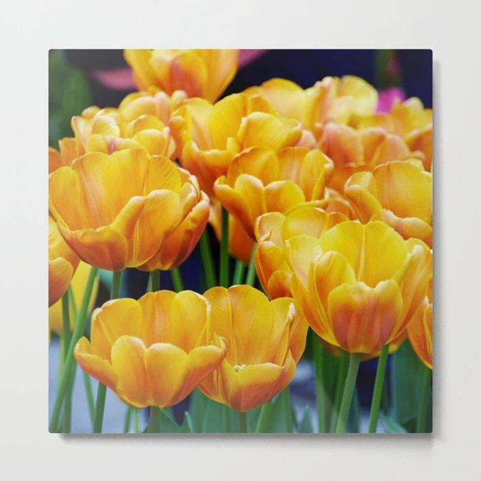 Yellow Orange Tulips Metal Print