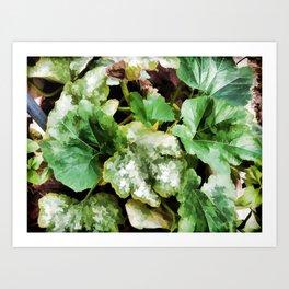 Zucchini plants Art Print