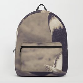 Adorable African Penguin Series 4 of 4 Backpack