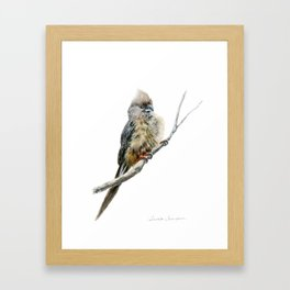 Speckled Mousebird by Teresa Thompson Framed Art Print