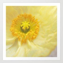 Icelandic Poppy Sweetness Art Print