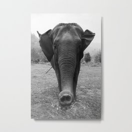Elephant Trunk Metal Print