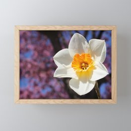 Daffodil with Cherry Blossoms Framed Mini Art Print