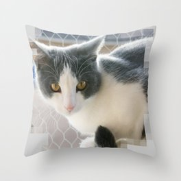 A Max And Mantle Bi Colour Cat Throw Pillow
