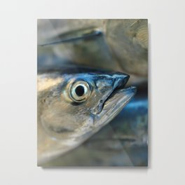 Big eye, tuna, fish, still life, photo, fine art, print, nature, sea, fishing, detail, blue Metal Print