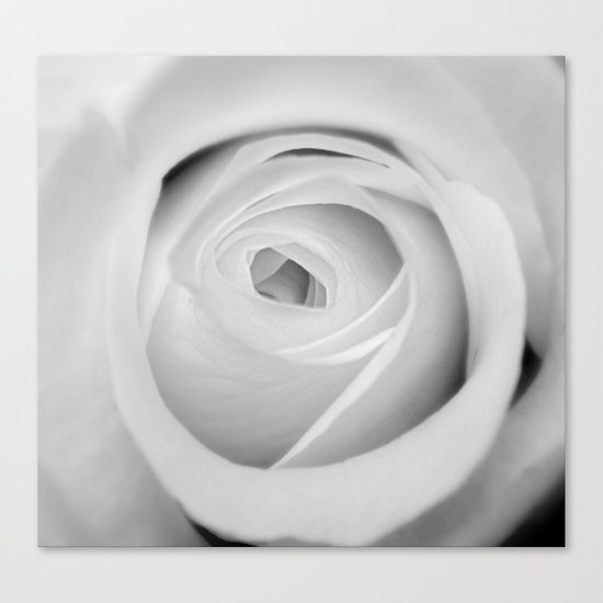 BWwhite Rose 2 Canvas Print