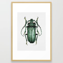 Big Green Bug Framed Art Print