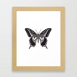Asian Swallowtail Framed Art Print