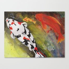 Playful koi fish swimming in a pond Canvas Print