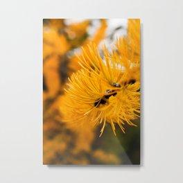 Golden Needles Metal Print