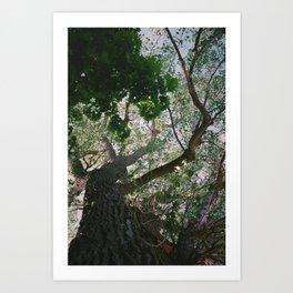 Consistant growth Art Print