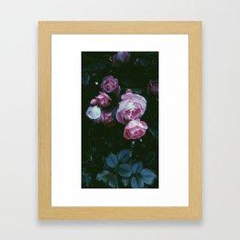 pink petals  Framed Art Print