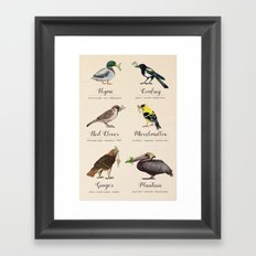 Birds, Herbs, and their Uses: Second Set Framed Art Print