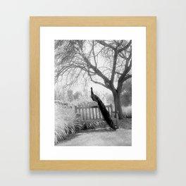 Bench Peacock Framed Art Print