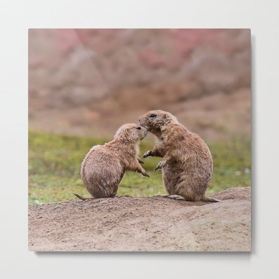 Cute little prairie dogs love Metal Print