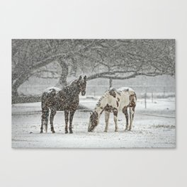 2 Horses under a tree in winter Canvas Print