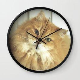 Siberian cat. Portrait of Mr. Cesare Wall Clock