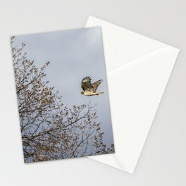 Red Tailed Hawk In Flight Stationery Cards