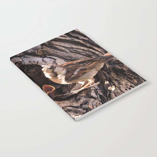 House Sparrow Keeping House Notebook