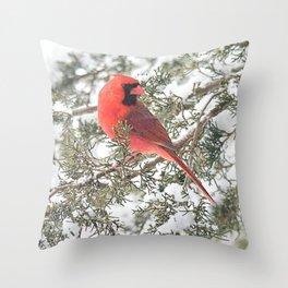 Cardinal on a Snowy Cedar Branch (v) Throw Pillow