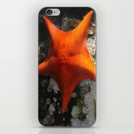 Starfish Duet iPhone Skin