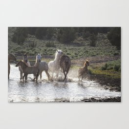 Splashing About At The Waterhole Canvas Print