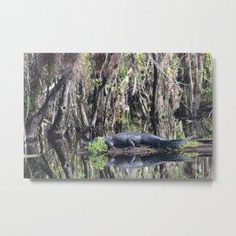 Swamp Gator Metal Print