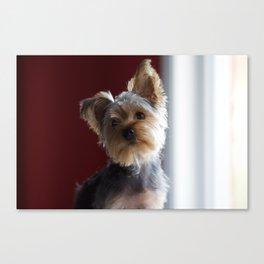 A Dog Named Dante Canvas Print