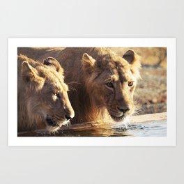 Asiatic Lion 10, Gir Forest, Gujrat, India Art Print