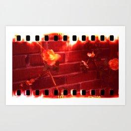 holga film x-processed, roses with brick Art Print