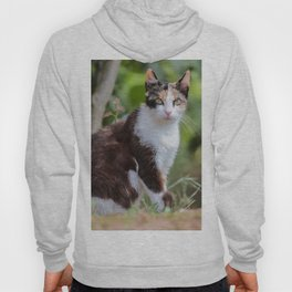 Are you meowing to me? Hoody