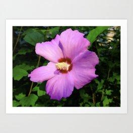 Rose OF Sharon In Mid Summer Art Print