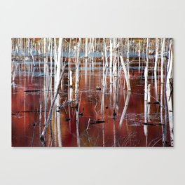 Automn Swamp Canvas Print