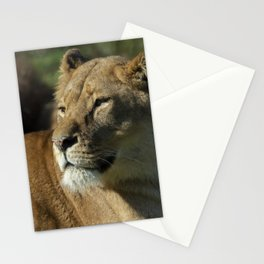Lioness stare Stationery Cards