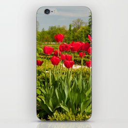 elm and red tulips arranged iPhone Skin