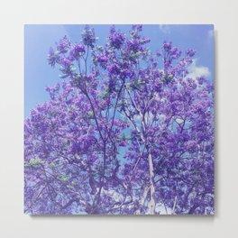 Purple Jacaranda Metal Print