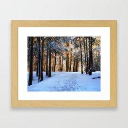 A Winter Morning in the Woods Framed Art Print